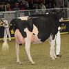 Royal16_Holstein_1M9A1251