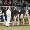Royal16_Holstein_L32A4877