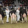 Royal16_Holstein_1M9A1303