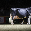 Royal16_Holstein_1M9A1517