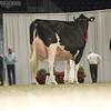 Royal16_Holstein_L32A4871