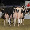 Royal16_Holstein_1M9A1444
