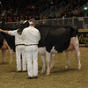 Royal16_Holstein_1M9A1635