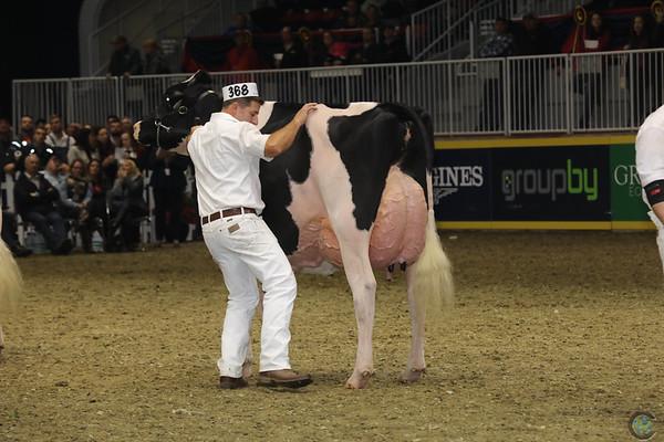 Royal16_Holstein_1M9A1676