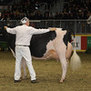Royal16_Holstein_1M9A1679