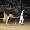 Royal16_Holstein_1M9A1478