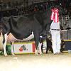 Royal16_Holstein_L32A4793