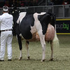 Royal16_Holstein_1M9A1710