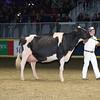 Royal16_Holstein_L32A4938