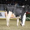 Royal16_Holstein_1M9A1470
