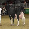 Royal16_Holstein_1M9A1672