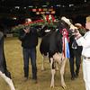 Royal16_Holstein_1M9A1832