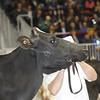 Royal16_Holstein_1M9A1233