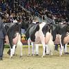 Royal16_Holstein_L32A4773