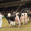 Royal16_Holstein_1M9A1203