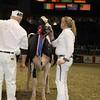 Royal16_Holstein_1M9A1796