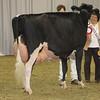 Royal16_Holstein_1M9A1440