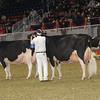 Royal16_Holstein_1M9A1357