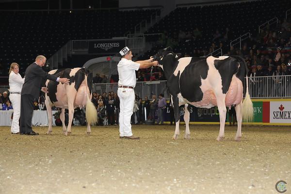 Royal16_Holstein_1M9A1694