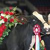 Royal16_Holstein_L32A5043