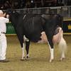 Royal16_Holstein_1M9A1727