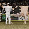 Royal16_Holstein_1M9A1338