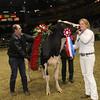 Royal16_Holstein_1M9A1841