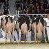 Royal16_Holstein_L32A4880