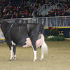 Royal16_Holstein_1M9A1721
