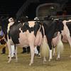 Royal16_Holstein_1M9A1782