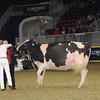 Royal16_Holstein_1M9A1737