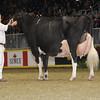 Royal16_Holstein_1M9A1686