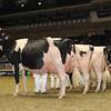 Royal16_Holstein_1M9A1202
