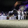 Royal16_Holstein_L32A4934