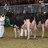 Royal16_Holstein_L32A4969