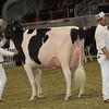 Royal16_Holstein_1M9A1243