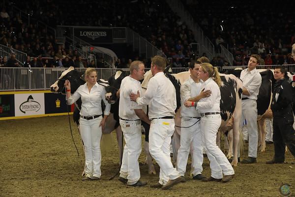 Royal16_Holstein_1M9A1403