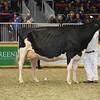 Royal16_Holstein_L32A4999