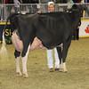 Royal16_Holstein_1M9A1254