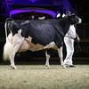 Royal16_Holstein_1M9A1553
