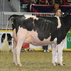 Royal16_Holstein_L32A4898