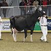 Royal16_Holstein_1M9A1293