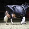 Royal16_Holstein_1M9A1520