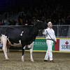 Royal16_Holstein_L32A4927