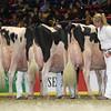 Royal16_Holstein_L32A4883