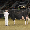 Royal16_Holstein_1M9A1731