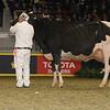 Royal16_Holstein_1M9A1339