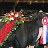 Royal16_Holstein_L32A5046