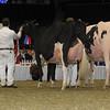 Royal16_Holstein_1M9A1447