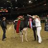 Royal16_Holstein_1M9A1845